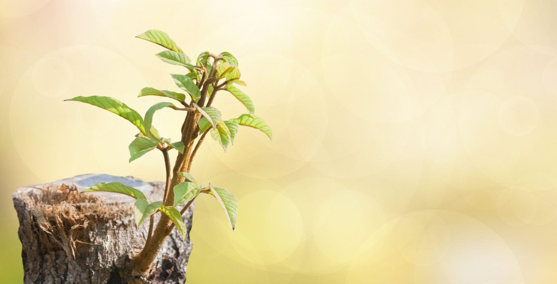 Hayat Kalitesini Artırmak için kişisel gelişime odaklanın